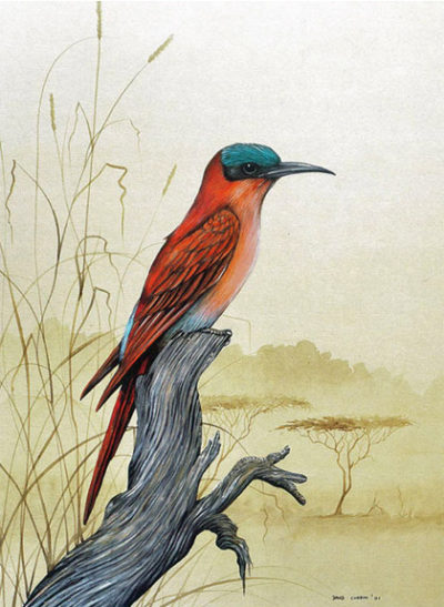 Carmine-bee-eater-large